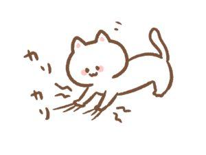 猫のひっかき傷と対処※放置は危険!猫ひっかき病になることも!