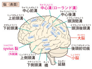 脳の老化を防ぐエクササイズ※ポイントは姿勢と目線だった!